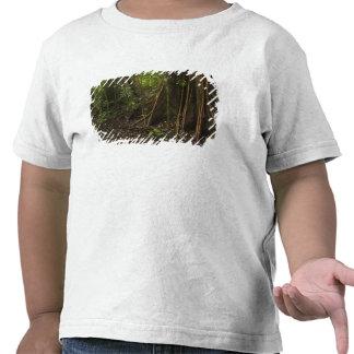Buttress Roots. Rainforest, Mapari Rupununi, Shirt