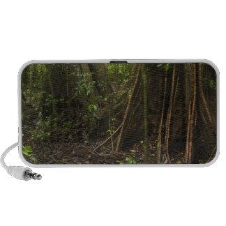 Buttress Roots. Rainforest, Mapari Rupununi, Laptop Speakers