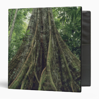Buttressed tree in rainforest, Corcovado Binder