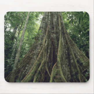Buttressed tree in rainforest, Corcovado Mouse Pad