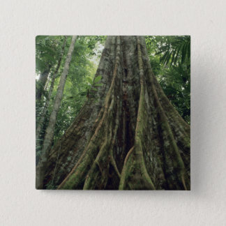 Buttressed tree in rainforest, Corcovado Pinback Button