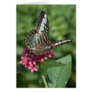 Buttrfly Greeting Card