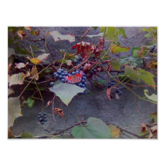 Buttterfly On Grapes Print