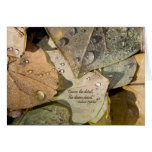 BUUF Gardens: Autumn Leaves Cards