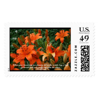 Buy a Lily Postage