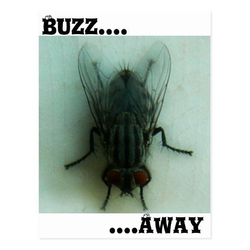 Buzz Away Postcard