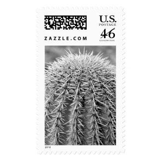 Buzz Cut Postage Stamp (Sonoran Desert Photo)