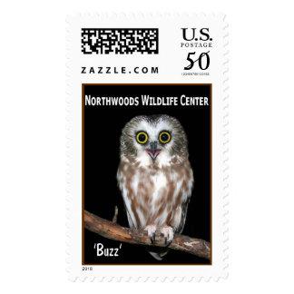 'Buzz' Saw-whet Owl Postage