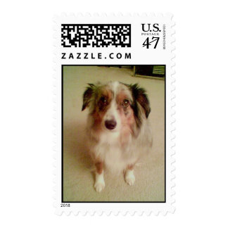 Buzz the Dog Stamp