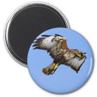 Buzzard  1 2 inch round magnet