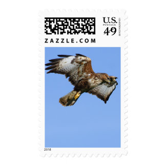 Buzzard  1 postage