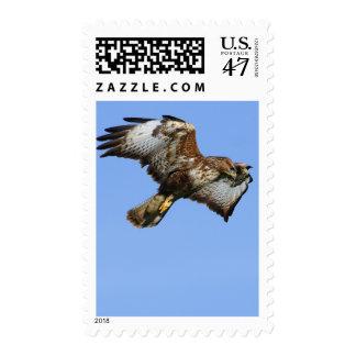 Buzzard  1 postage stamp