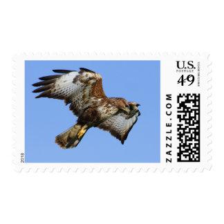 Buzzard  1 stamp