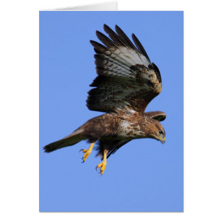 Buzzard  3 card