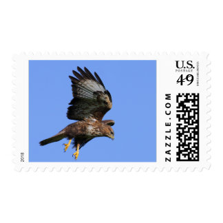 Buzzard  3 stamp