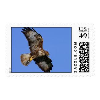 Buzzard  4 postage stamp