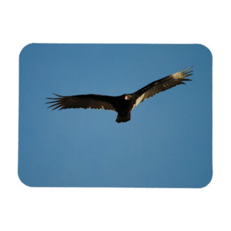Buzzard in Flight 1 Magnet