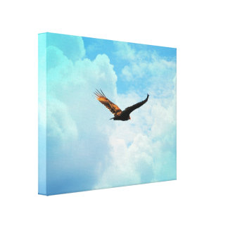 Buzzard in Flight 3 Canvas Print