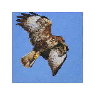 Buzzard Wrapped Canvas