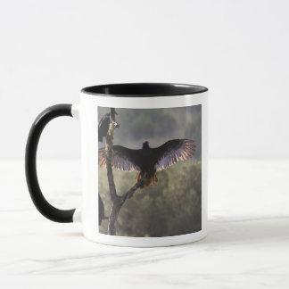 Buzzards' Roost near Leaky, Texas Mug
