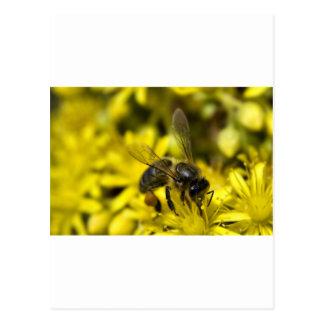 Buzzy bee postcard