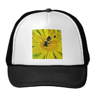 buzzzzz gorra