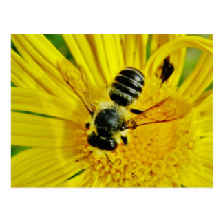 buzzzzz postcard