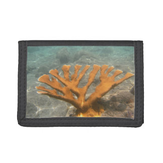 BVI Coral Trifold Wallets