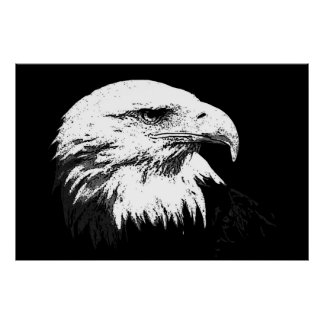 BW American Bald Eagle Poster Print Eagles Posters