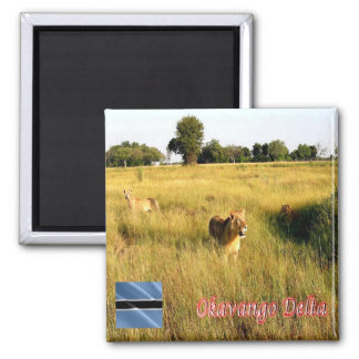 BW - Botswana -  Okavango Delta - Lions Magnet