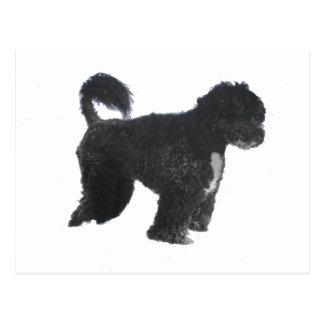 bw completo portugese del perro de agua postal