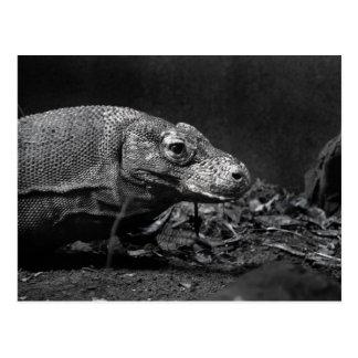 bw del dragón de komodo que parece correcto tarjeta postal