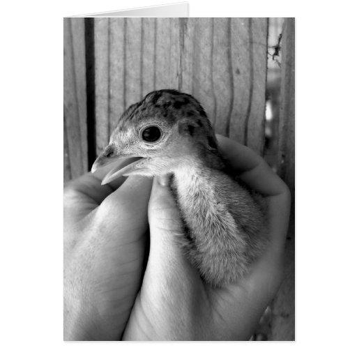 bw del pavo del bebé en manos felicitaciones