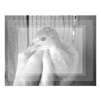 bw del pavo del bebé en manos membretes personalizados