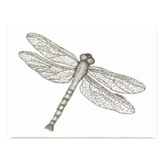 bw_dragonfly05 001 postal