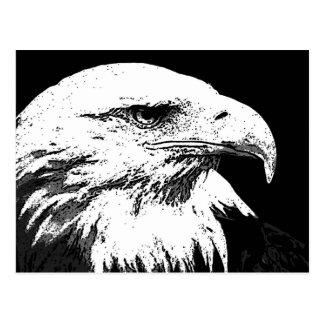 BW Eagle calvo americano Postales