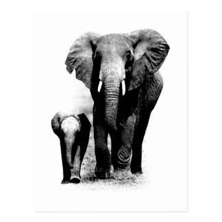 BW Elephant & Baby Elephant Postcard