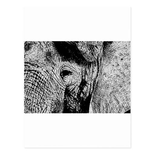 BW Elephant Eye Post Card