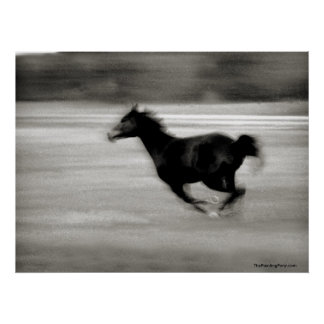 BW Galloping Horse Poster