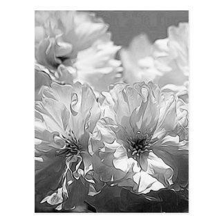 BW Garden Flowers Postcard