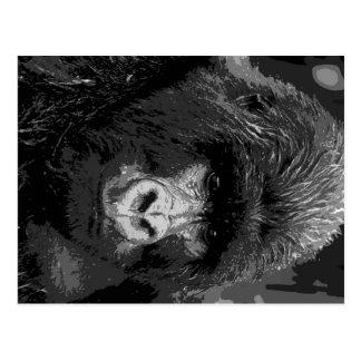 BW Gorilla Face Post Card