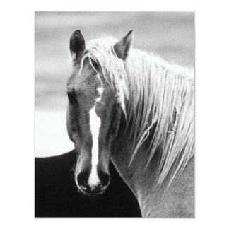 BW Horse Portrait 4.25x5.5 Paper Invitation Card