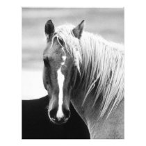 BW Horse Portrait Flyer
