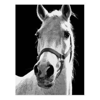 BW Horse Postcard