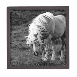 BW Horse Premium Keepsake Box
