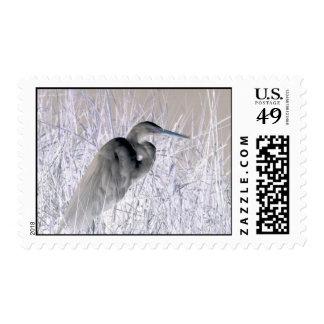 bw invertido del egret frecuentado envio