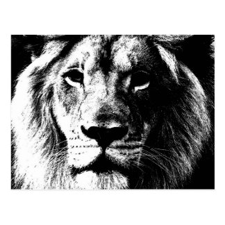 BW Lion Face Post Card