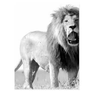 BW Lion Postcard