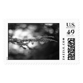 BW Pinecone Stamp