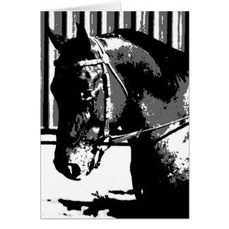 BW Stallion Horse Card